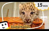 Sandmnnchen-Zootierbabys-Folge-53-Unser-Sandmnnchen-rbb-media-1