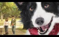 Der-Hundeengel-Cooper-Eine-wunderbare-Freundschaft-Kinderfilm-Spielfilm-fr-Kinder-Kinderfilme-1