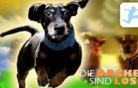Die-Dackel-sind-los-Familienfilm-in-voller-Lnge-kostenlos-ganzer-Film-auf-deutsch-1