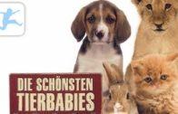 Die-schnsten-Tierbabies-Tierdokuemtation-in-deutsch-volle-Lnge-fr-Kinder-1