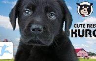 Gute-Reise-Kuro-ganzer-Kinderfilm-Tierfilm-mit-Hunden-Spielfilm-deutsch-Kinderfilme-gratis-1