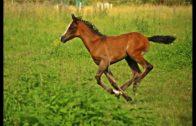 Mein-liebstes-Fohlen-Lehrfilm-fr-Kinder-Pferdefilm-Kinderfilm-Tierfilm-Lernvideo-1