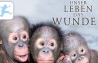Unser-Leben-das-Wunder-Tier-Dokumentation-deutsch-in-voller-Lnge-kostenlose-Kinderfilme-1