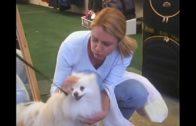 Nur-Hunde-kommen-in-den-Himmel-Kinderfilm-Familienfilm-ganze-Kinderfilme-kostenlos-1
