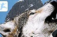 Die-Legende-des-weien-Wolfes-Abenteuerfilm-Kinderfilm-in-voller-Lnge-auf-deutsch-KIXI-Free-1
