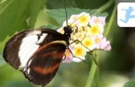Der-Garten-der-Schmetterlinge-Natur-Tierdokumentation-kostenlos-ansehen-komplett-auf-Deutsch-1