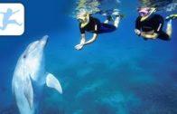 Die-Welt-der-Delfine-Tierdokumentation-fr-Kinder-kostenlos-ansehen-komplett-auf-Deutsch-1