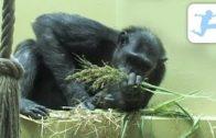 Im-Knigreich-der-Schimpansen-Tierdoku-fr-Kinder-kostenlos-komplett-auf-Deutsch-ansehen-1