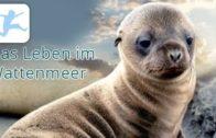 Das-Leben-im-Wattenmeer-Tierdokumentation-Lehrfilm-Tierfilm-Schulfilm-in-voller-Lnge-kostenlos-1
