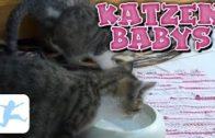 Katzenbabys-Katzen-Dokumentation-deutsch-Reportage-in-voller-Lnge-kostenlos-ansehen-1