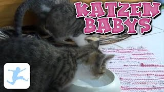 Dokumentation Katzen
