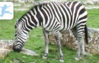 Meine-Tierwelt-Eine-Dokumentation-fr-Gro-und-Klein-Tierdokumentation-fr-Kinder-kostenlos-1