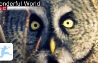 BBC-Wonderful-World-Part-44-Dokumentation-Tierdokumentation-in-deutsch-volle-Lnge-BBC-Lehrfilm-1