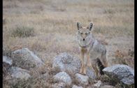 Safari-Afrika-Tierfilm-auf-ENGLISCH-Tierdoku-deutsch-Lehrfilm-Kinderfilm-ganze-Kinderfilme-1