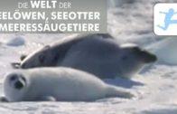 Die-letzten-Paradiese-Die-Welt-der-Seelwen-Seeotter-Meeressugetiere-Tierdokumentation-deutsch-1