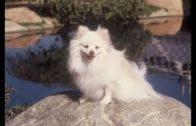 Nur-Hunde-kommen-in-den-Himmel-Kinderfilm-Hundefilm-Spielfilm-fr-Kinder-ganze-Kinderfilme-1