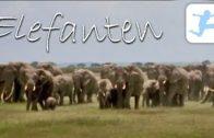 Elefanten-am-Kilimanjaro-Lehrfilm-Dokumentation-deutsch-kostenlose-Doku-in-voller-Lnge-1