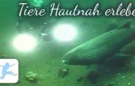 Tiere-hautnah-erleben-Naturfilm-Dokumentation-deutsch-kostenlos-Tierdokumentation-1