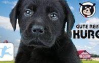 Gute-Reise-Kuro-Kinderfilm-Tierfilm-mit-Hunden-ganzer-Spielfilm-deutsch-Kinderfilme-kostenlos-1
