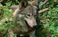 Trapper-Wolf-und-Fhrtensucher-Abenteuerfilm-fr-Kinder-deutsch-ganze-Kinderfilme-kostenlos-1