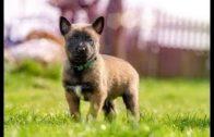 Hundebabys-Lehrfilm-fr-Kinder-auf-deutsch-Hundefilm-Hundevideo-Dokumentation-fr-Kinder-Doku-1